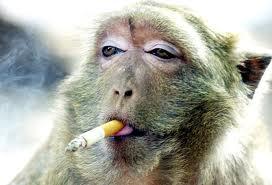 Gambar Monyet Bawa Pisang Ditemukan Manusia Babi Dan Manusia Monyet Lentera Zaman