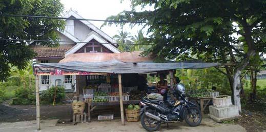 perjuangan penjual buah lentera zaman 1